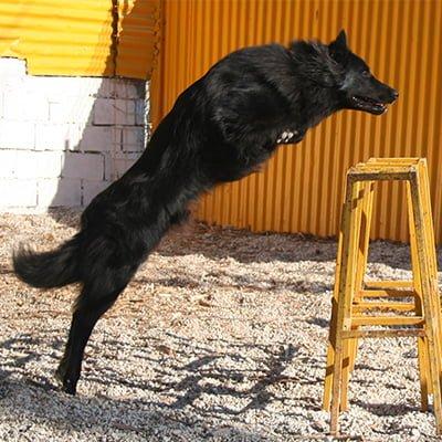 εκπαιδευση-σκυλων-marcius