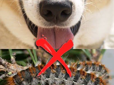 σκυλος καμπιες