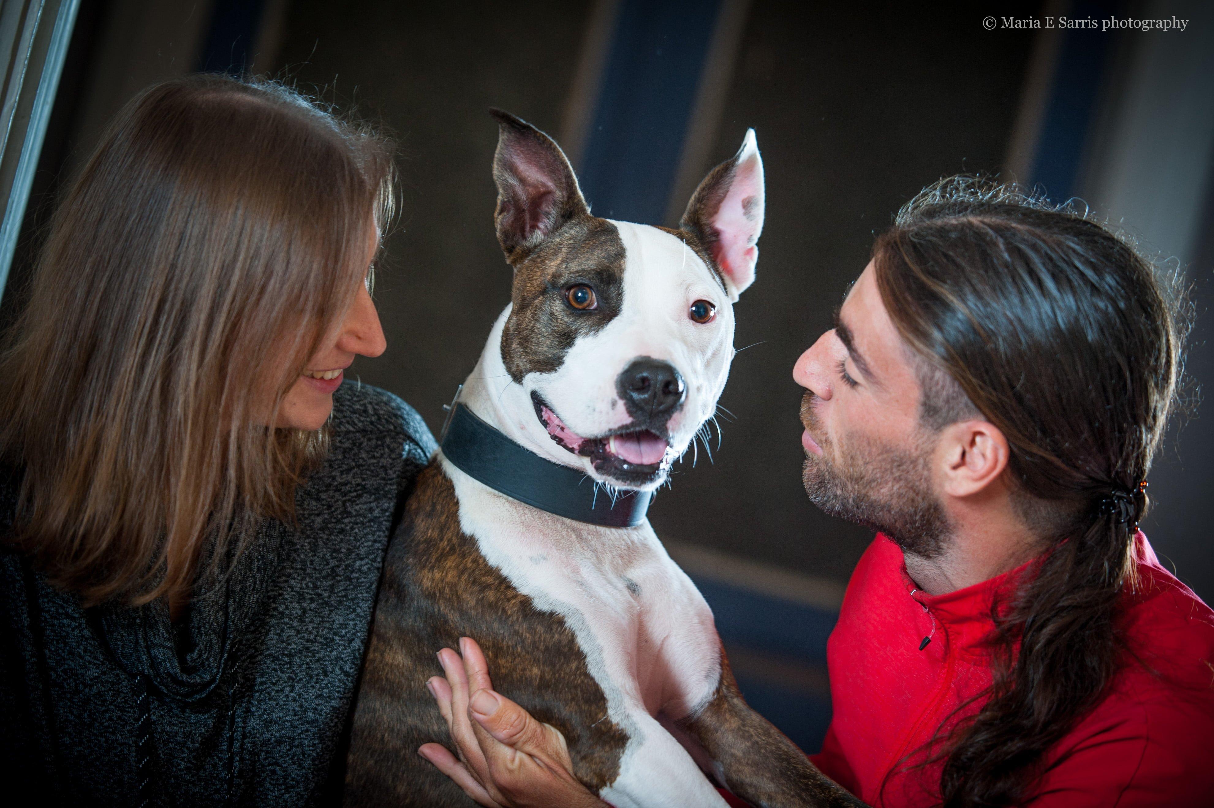 εκπαιδευση σκυλων Χρηστος Κουτσης φωτογραφια Maria E Sarris 8