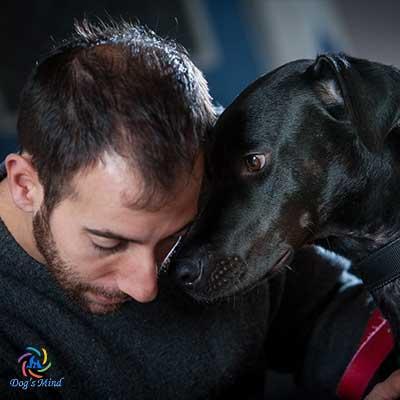 εκπαιδευση σκυλων συναισθημα