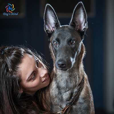εκπαιδευση σκυλων σωμα